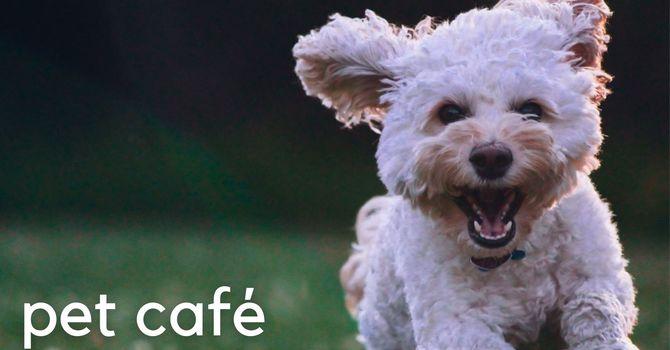 Pet Café Lite image