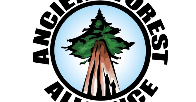 Multi Faith old growth protection petition image