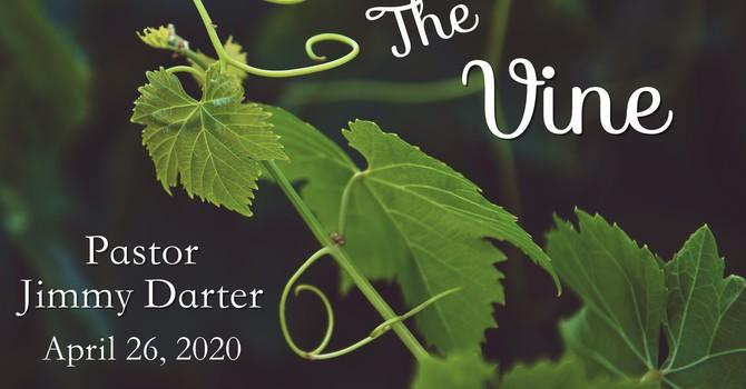 The Vine