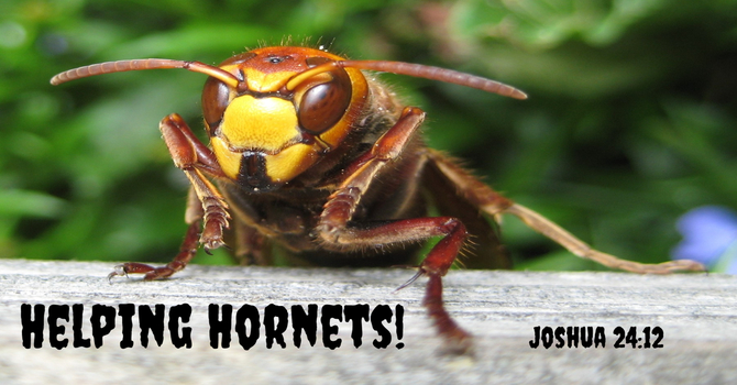 Helping Hornets image