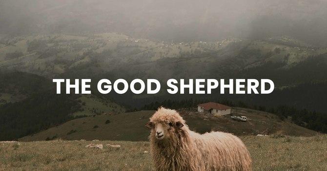 The Good Shepard