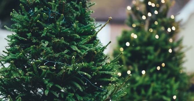 Outdoor Christmas Tree Display