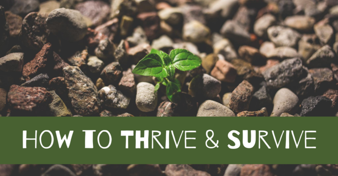How to Thrive & Survive