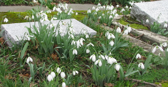 Spring Cleanup Time in St. Luke's Cemetery image