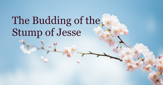 The Branch of Jesse Fulfills the Hope of God's People