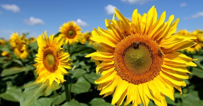 Pure van Gogh image