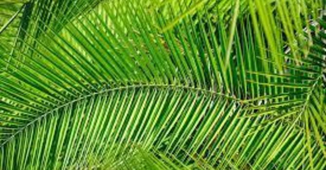 A Different King (Palm Sunday)