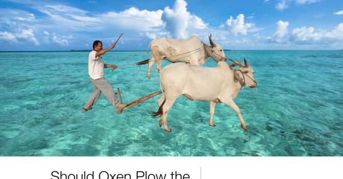 Should Oxen Plow the Sea?