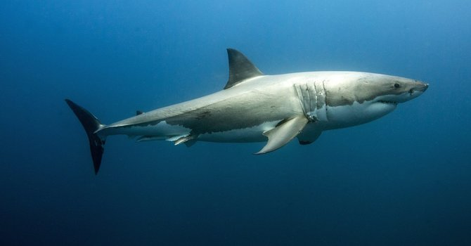Canada Bans the Import and Export of Shark Fins image
