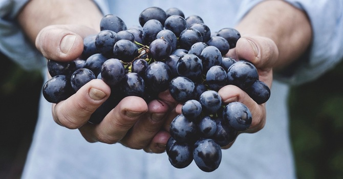 Isaiah's Vineyard Song