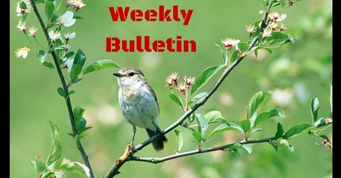 Weekly Bulletin | August 7, 2016 image