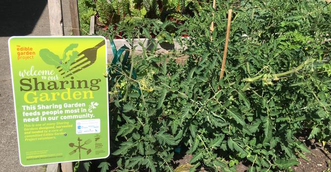 Community Garden  Update image