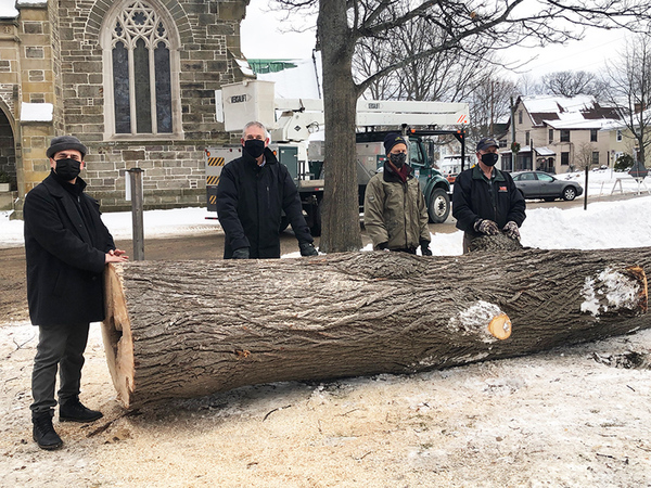 Basswood on Cathedral grounds given new life with carvers