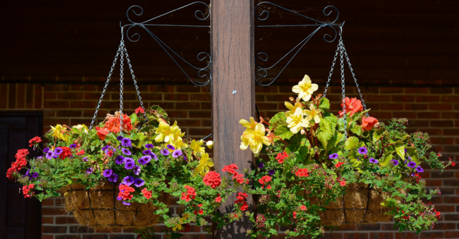 MOTHER'S DAY FLOWER BASKET SALE image