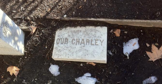Charley Brainerd image