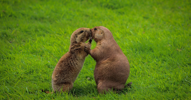 Groundhogs and hearts image