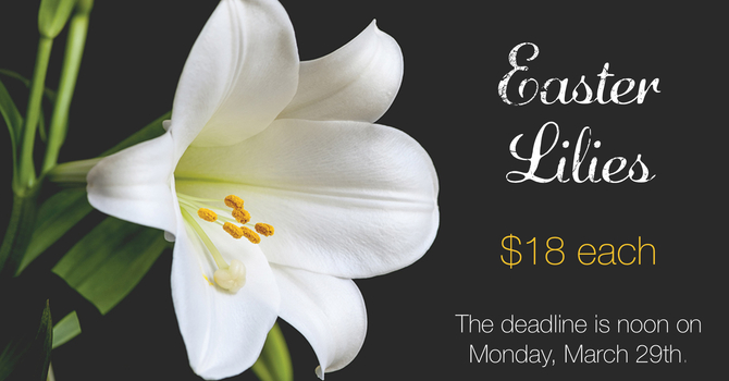 Easter Lilies on sale now!