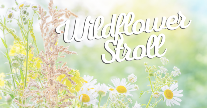 Table Mountain Wildflower Stroll
