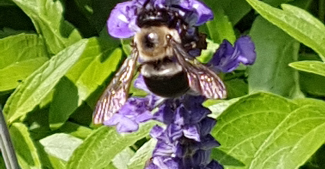 Pollinators: Coming Soon to A Church Near You!  image