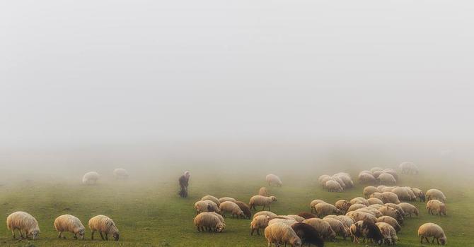 Through the Fog image