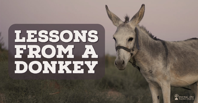 Lessons From a Donkey (recast)