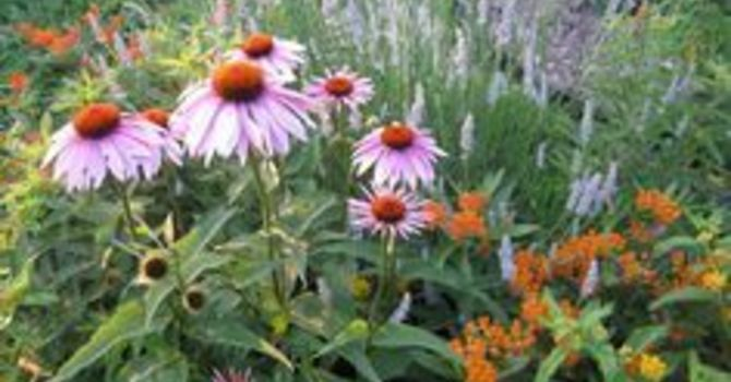 Why Are We Planting a Native Garden? image