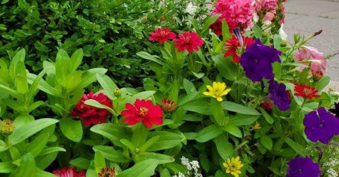 Spring Plant Sale image