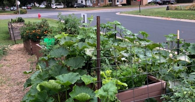Garden Boxes image