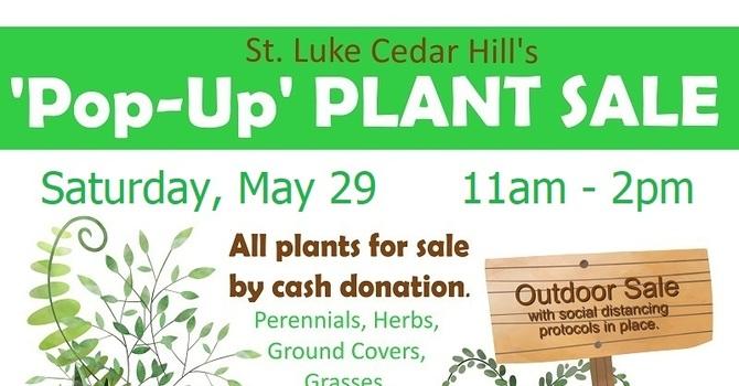 Pop-Up Plant Sale