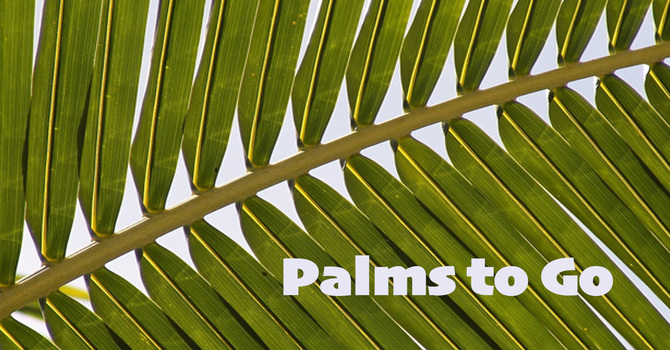 Palms-To-Go…and More!