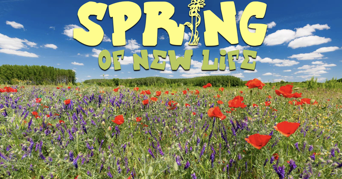 Spring Of New Life