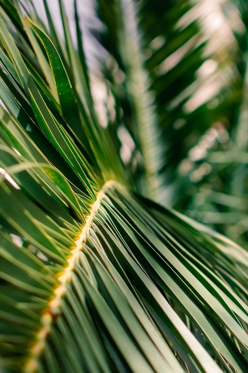 St. John's Palm Sunday Service Broadcast March 28, 2021