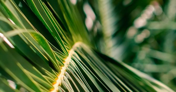 St. John's Palm Sunday Service Broadcast March 28, 2021