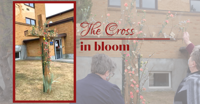 The Cross in Bloom image