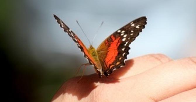 Of Butterflies and Gentleness