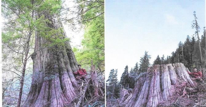 Faith in Trees workshop