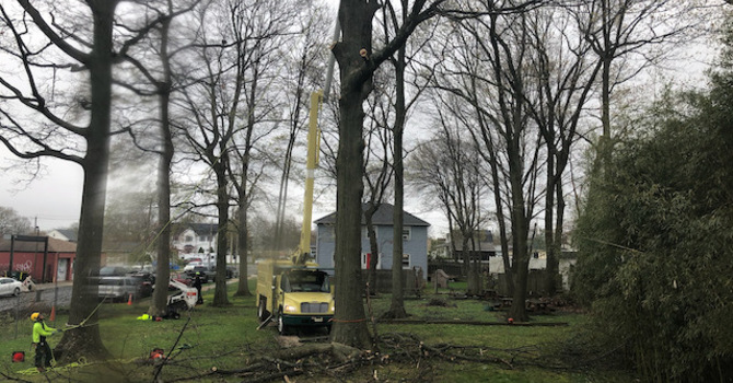 Another Tree Removal image