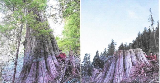 Faith in Trees