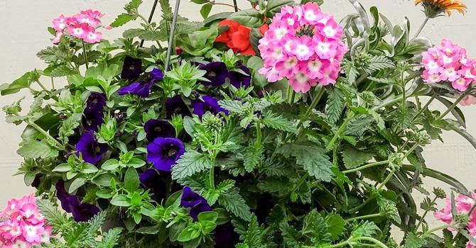 Hanging Flower Basket Fundraiser