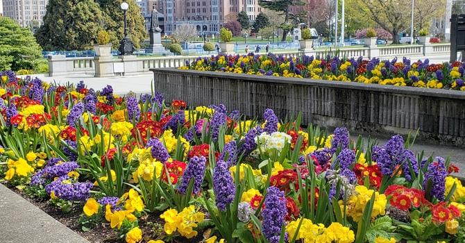 Spring Miracles