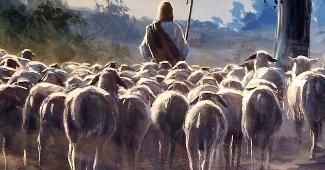 All in His Flock