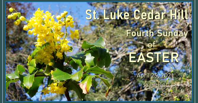 Video of the Livestream of Fourth Sunday of Easter Service Now Available image