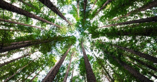 People as Trees Walking