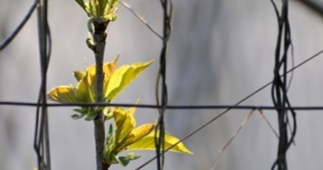 FOR CREATION: Earth Day Photo Video