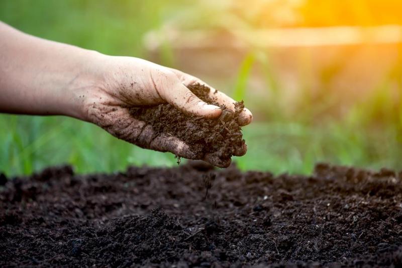 Fertilizing Seeds of Hope