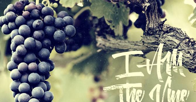 """I am the Vine."""