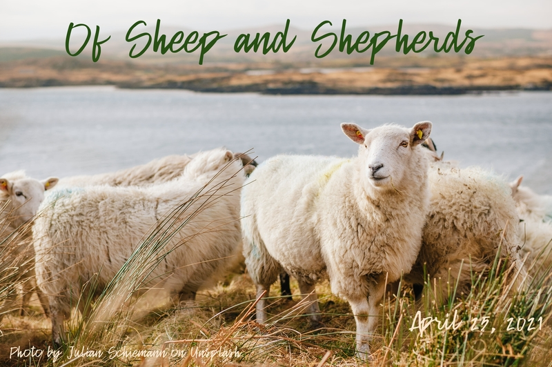 Of Sheep and Shepherds