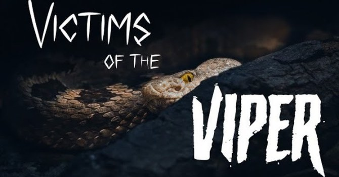 Victims of the Viper