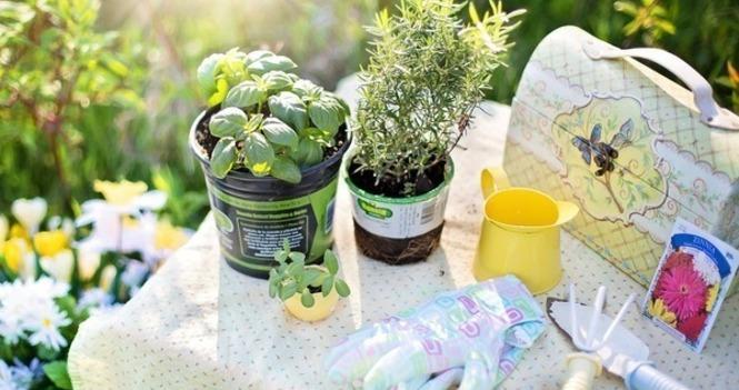Parish Plant Sale - Saturday May 15th