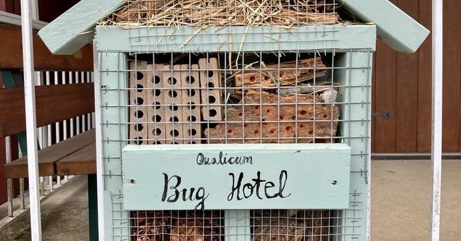 Qualicum Bug Hotel